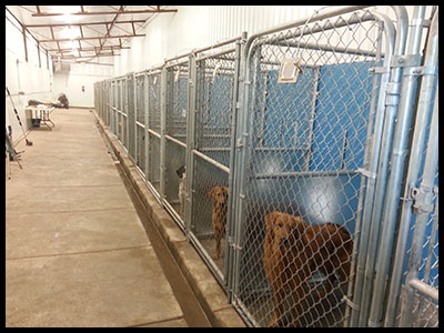 KENNEL_INSIDE